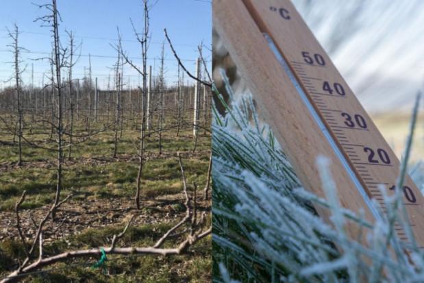 Wczesnowiosenna pogoda wpłynie na gorsze zbiory owoców w 2021 r.?
