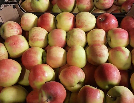 Ceny jabłek na sortowanie za niskie - sadownicy nie chcą kontynuować sprzedaży
