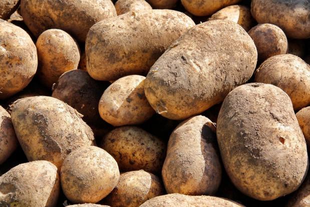 Nowy środek biologiczny przeciwko kiełkowaniu bulw ziemniaka