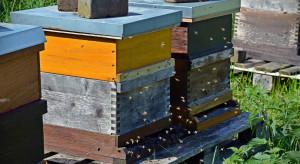 Złodzieje ukradli ule z pszczołami - straty wynoszą 10 tyś złotych