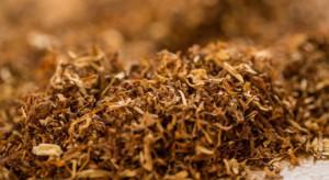 Nielegalny tytoń w...warzywniaku