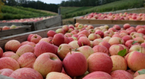 Czy pandemia Covid-19 pokrzyżuje zbiory jabłek w sezonie 2021?
