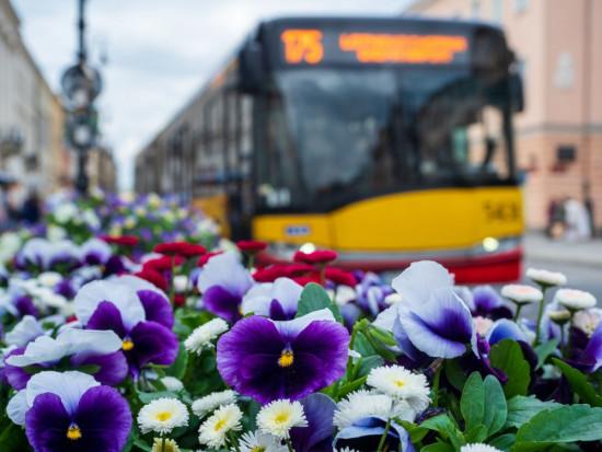 Warszawa: Ponad 50 km ulic obsadzonych drzewami, krzewami i bylinami