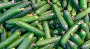 Rzeszów: jak wspierać lokalnych producentów warzyw w czasie lockdownu?