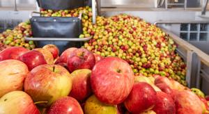 Jabłka przemysłowe: kolejne spadki cen