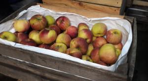 Rynek Bronisze: Stagnacja w sprzedaży jabłek, brakuje kupujących