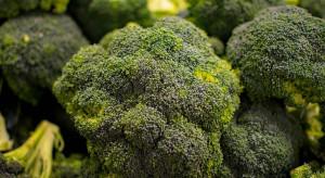 Hiszpania: Ceny brokułów na najwyższym poziomie od roku