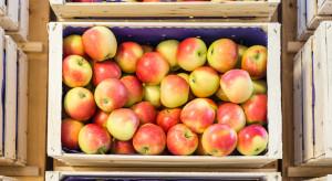 Jabłka na sortowanie: popyt jest słaby, ale ceny pozostają stabilne