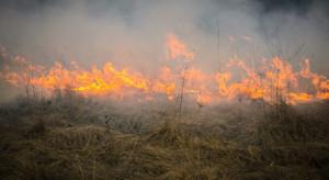 Śląskie: Od kwietnia strażacy gasili ponad 600 pożarów traw