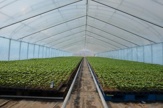 Wiosenna produkcja warzyw - jakie wyzwania?