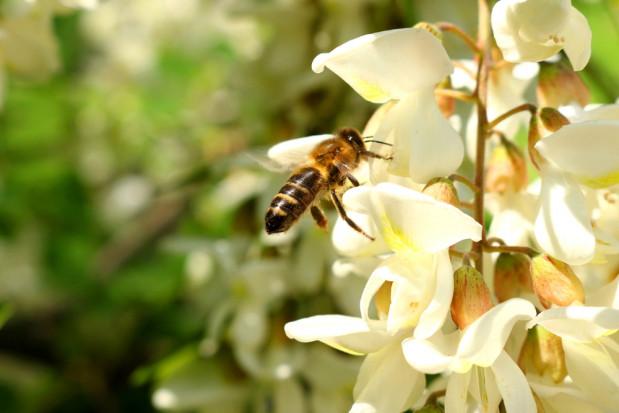 Zielona Góra: Powstała enklawa dla pszczół