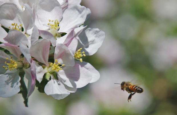 Ochrona pszczół: 9 wymogów dla stosujących śor