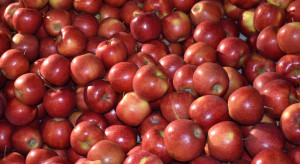 Appolonia: popyt na polskie jabłka jest nadal wysoki