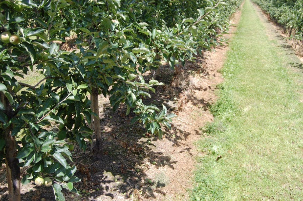 Herbicyd Halvetic – nowość w ofercie CIECH Sarzyna