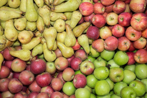 WAPA: Ile jabłek i gruszek w polskich oraz europejskich chłodniach?