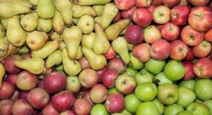 We włoskich magazynach najwięcej jabłek. Polska z najwyższym wzrostem zapasów