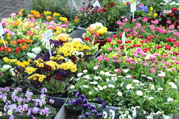 Bronisze: ruszył sezon na rośliny ogrodowe