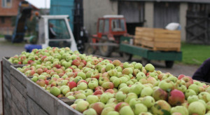 Ceny jabłek przemysłowych: spekulacje nadal trwają