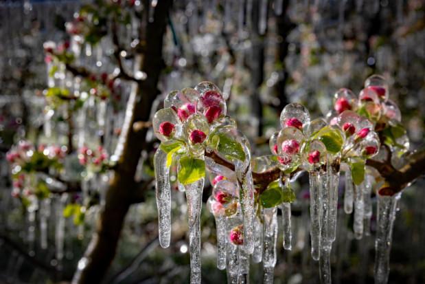 Przymrozki, deszcze i burze  - prognozy na maj nie sprzyjają ogrodnikom