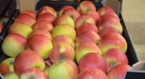 Tajwan - rynek obiecujący dla polskich jabłek, ale bardzo wymagający