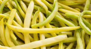 Ceny warzyw w Broniszach: fasolka szparagowa spod osłon nawet za 60 zł/kg