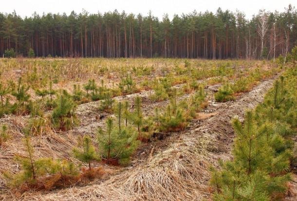 MRiRW: Wsparcie dla ekosystemów leśnych z PROW od 17 maja