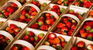 Rynek Bronisze: w handlu mało jest krajowych truskawek