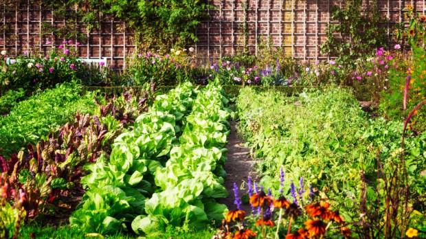 Łódź: Miasto pomoże w zakładaniu ogrodów warzywnych