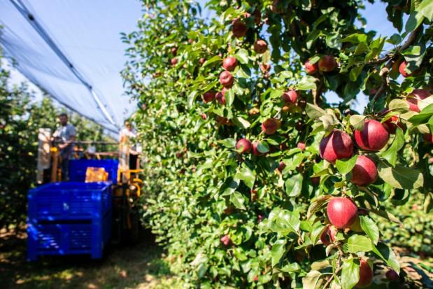 PIE: w ub.r. część pracowników mogła zasilić szarą strefę w rolnictwie