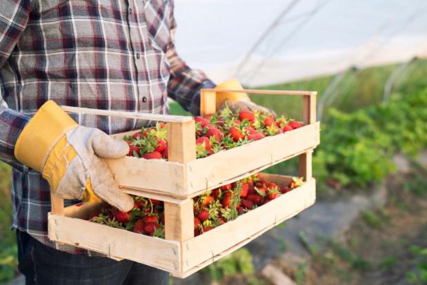 Początek sezonu ogrodniczego - jak jest z dostępnością pracowników?