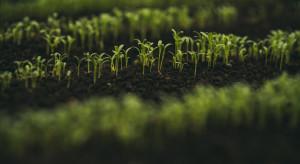 Przepisy dot. produkcji ekożywności trzeba uprościć