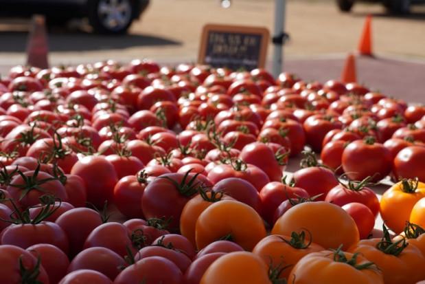 Maroko zwiększa eksport pomidorów do Francji, Wlk. Brytanii, Hiszpanii, Holandii