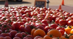 Maroko zwiększa eksport pomidorów