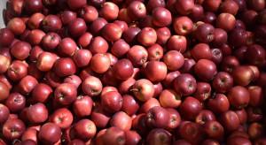 Stagnacja na rynku jabłek - co dalej z handlem?