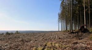 Duże zagrożenie pożarowe w lasach w połowie kraju
