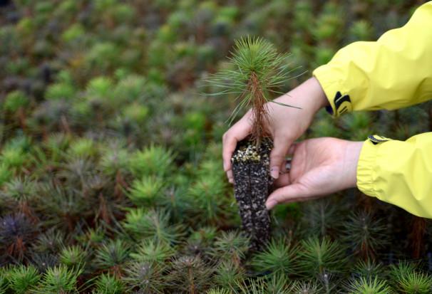 Śląscy ekolodzy rozdadzą sadzonki drzew i kwiatów za surowce wtórne