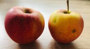 Nadszedł czas na promocję nieidealnych jabłek po gradzie?