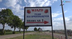Truskawkowa Giełda Goławin rusza od 15 maja