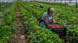 Azjaci mogą zastąpić Ukraińców przy zbiorach owoców
