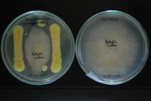 Innowacyjne bionawozy - trwają badania w Instytucie Ogrodnictwa - PIB