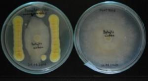 Innowacyjne bionawozy - badania w Instytucie Ogrodnictwa - PIB