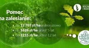Pomoc na zalesianie: 1 czerwca rusza nabór wniosków w ARiMR