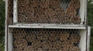 Ochrona pszczół - jakie naturalne metody zapobiegania warrozie?