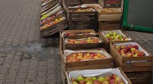 Sprzedaż jabłek na Broniszach - jakie ceny i popyt?
