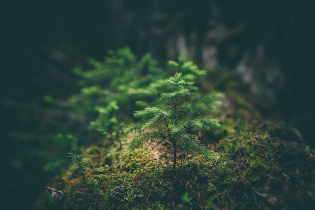 Wsparcie na zalesianie: wkrótce ruszy nabór wniosków w ARiMR