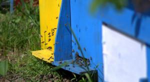 Będzie pomoc dla pszczelarzy i rolników po klęskach żywiołowych