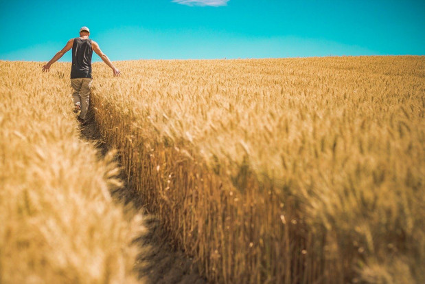 Premie dla młodych rolników i restrukturyzacja małych gospodarstw – wnioski do 30.06