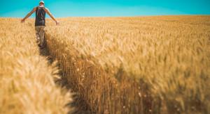 Premie dla młodych rolników i restrukturyzacja – wnioski do 30.06