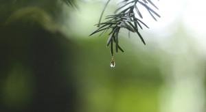 IMGW: piątek pochmurny, będą burze i przelotny deszcz