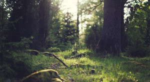 Sejm: Komisje za odrzuceniem projektu ws. zamiany gruntów leśnych
